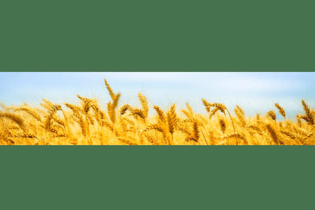 Wheat Field - Ag Non-Trader (2)